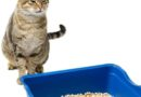 infection urinaire chez les chats