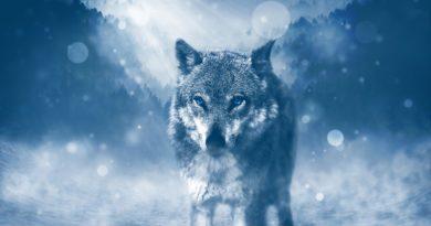 Objets loup: laissez-vous séduire par les motifs loup tendance