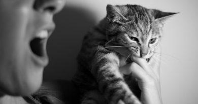 Pourquoi mon chat me mord quand je le caresse?