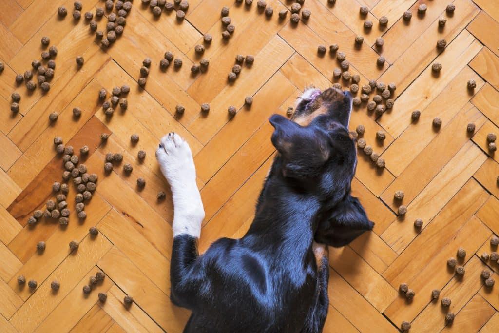 5 meilleures croquettes pour chien