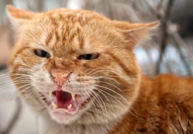 chat qui crache pourquoi