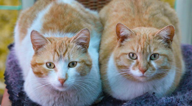 choisir chat mâle et femelle