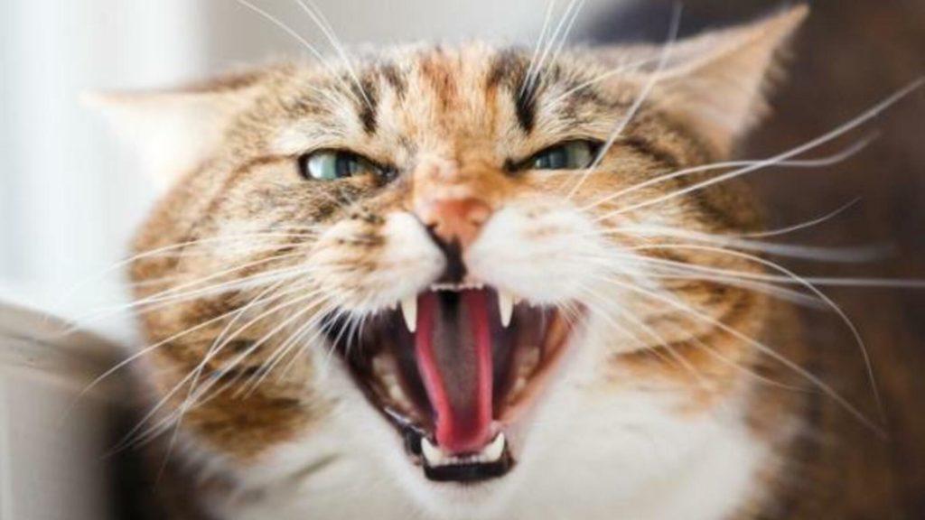 gérer chat qui crache