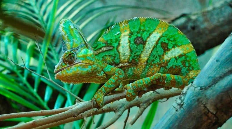reptile domestique