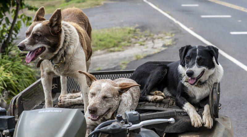 chiens de taille moyenne