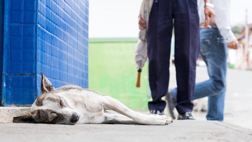 diagnostiquer un cas d'empoisonnement chien