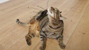 terre de diatomée et puces chat