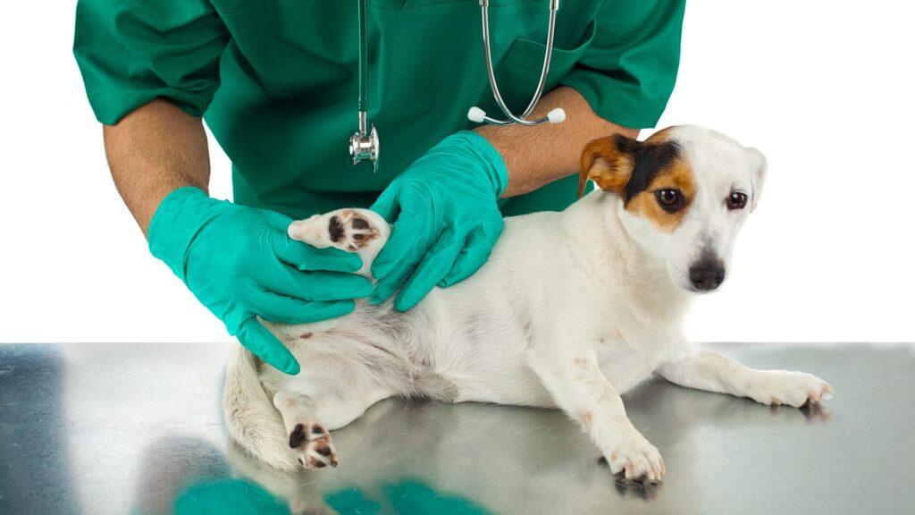 traiter cas de tique chez le chien