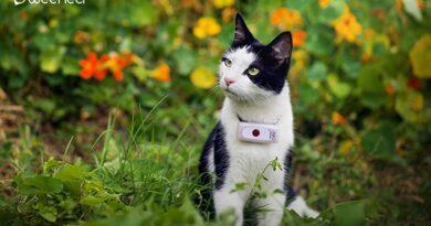 Weenect Cats 2 Avis – Le plus petit collier GPS pour chat au monde