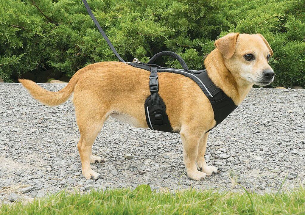 EasySport harnais de PetSafe