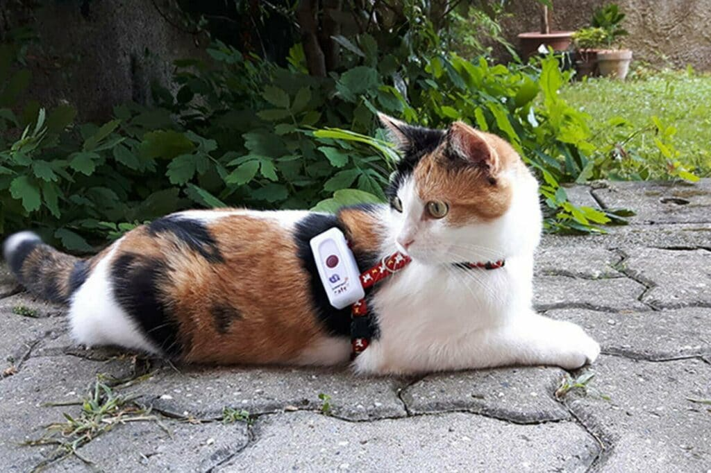 traceur GPS Weenect Cats 2