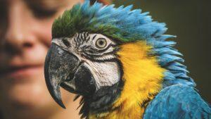 adopter un perroquet