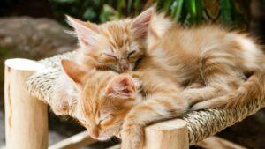 chat ronronne