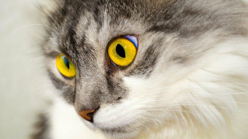 chat stressé pourquoi