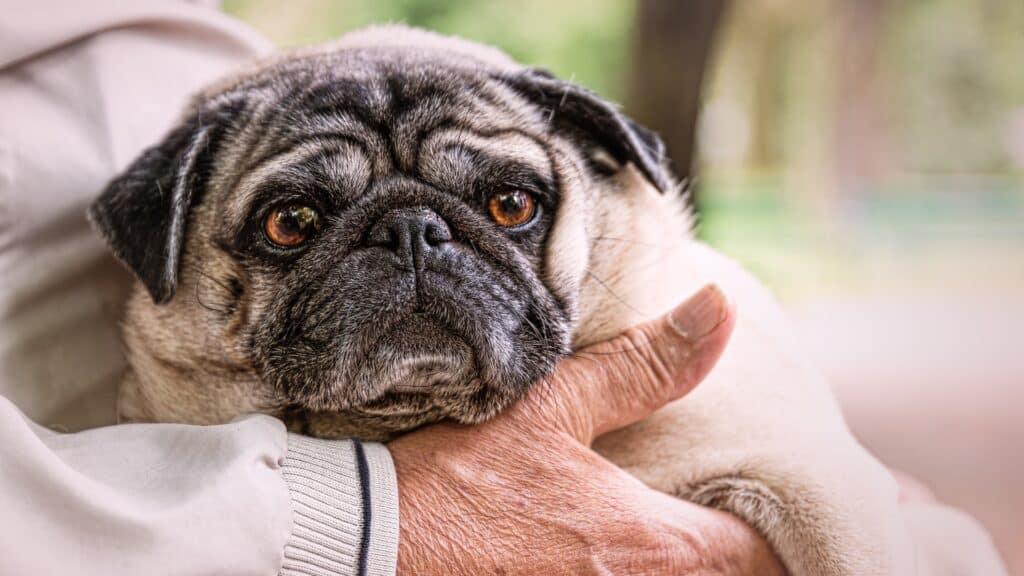comment donner un chien