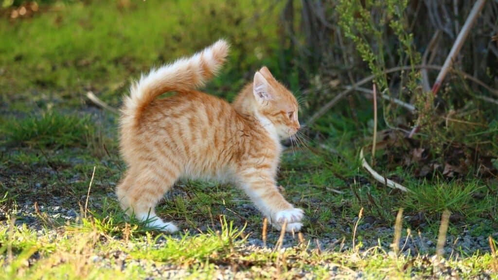comment éduquer un chaton