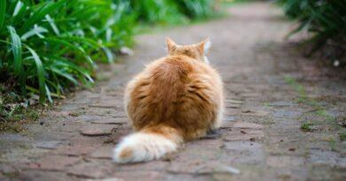 queue du chat