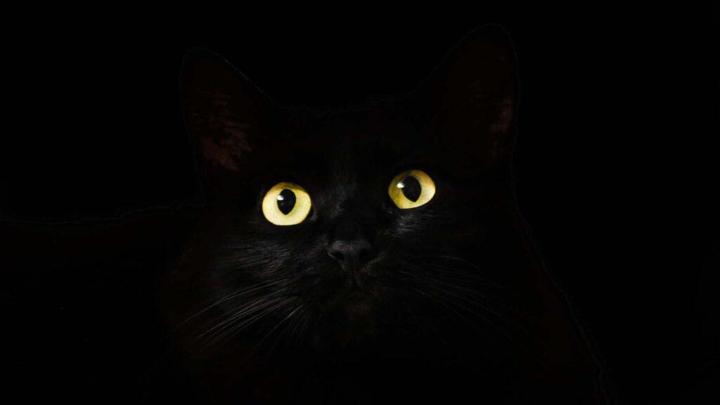 réalité vision du chat