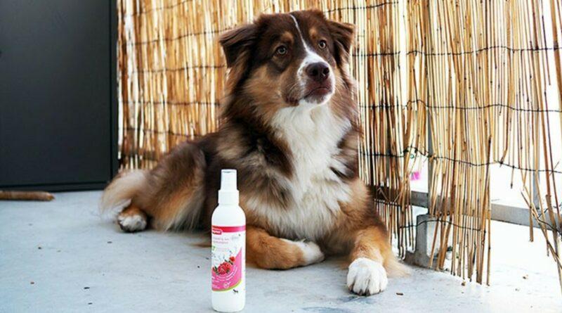shampoing chien sec