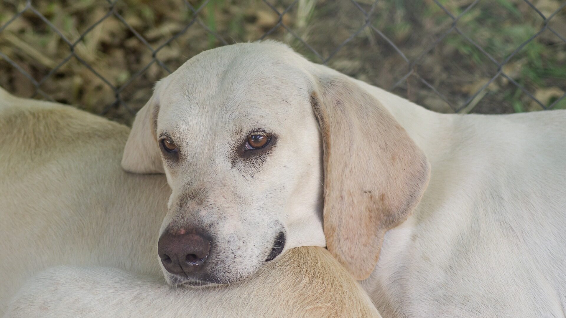 adopter chien Billy
