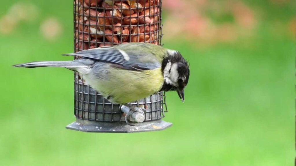nourrir oiseaux du ciel