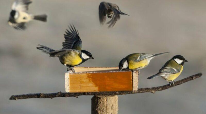 oiseaux du ciel