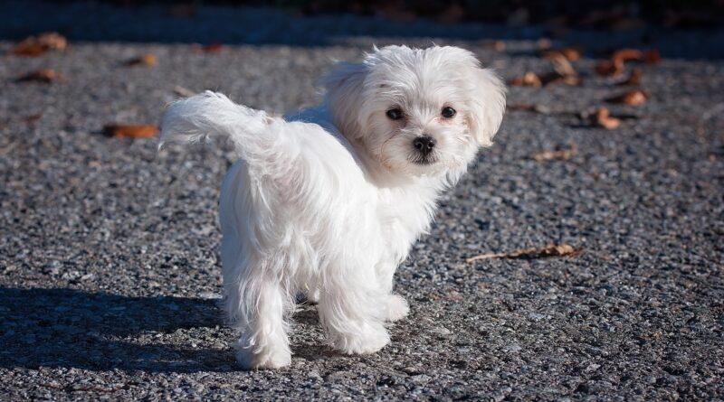 petit chien mignon