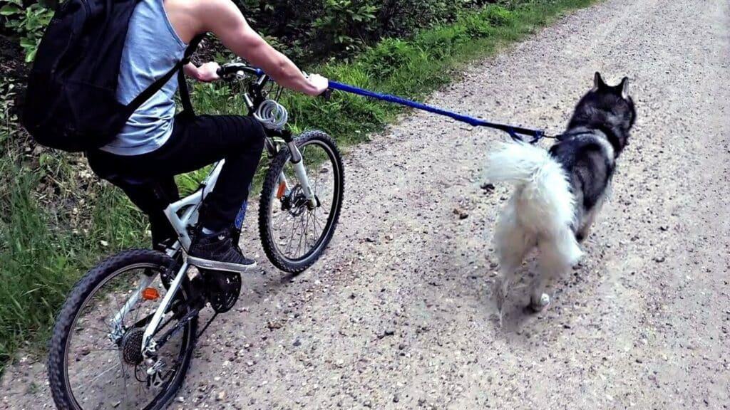 pratiquer cani-VTT