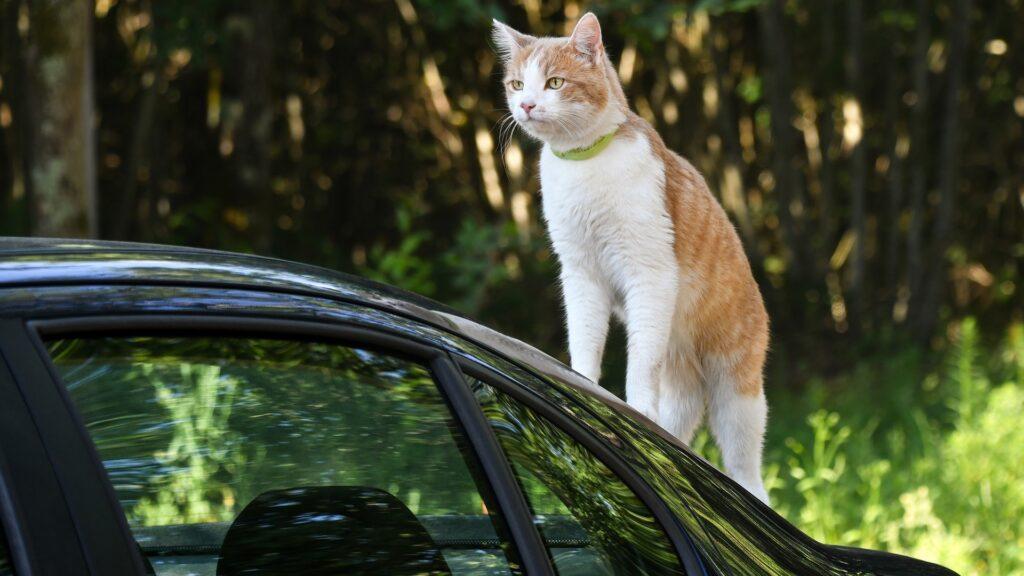 principe taxi animalier