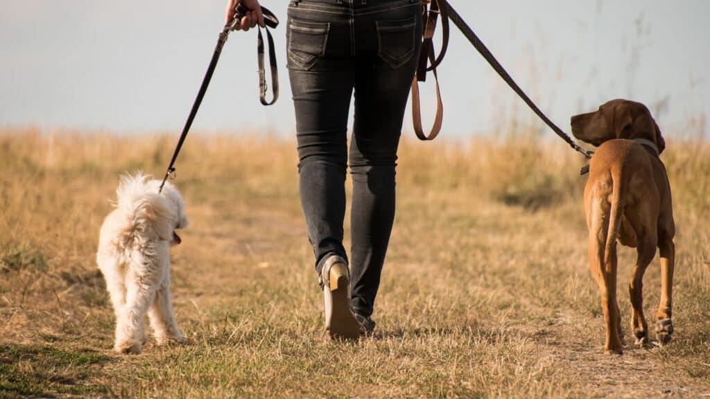 types de pensions pour chien
