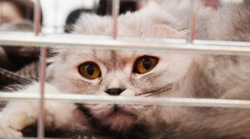 Souffle au cœur du chat