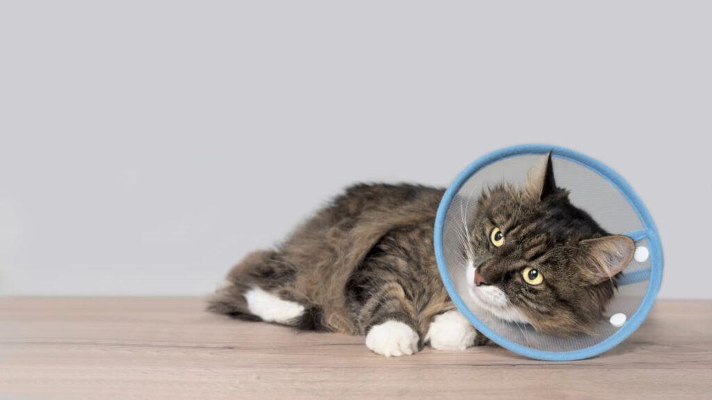 avantages collerette pour chat