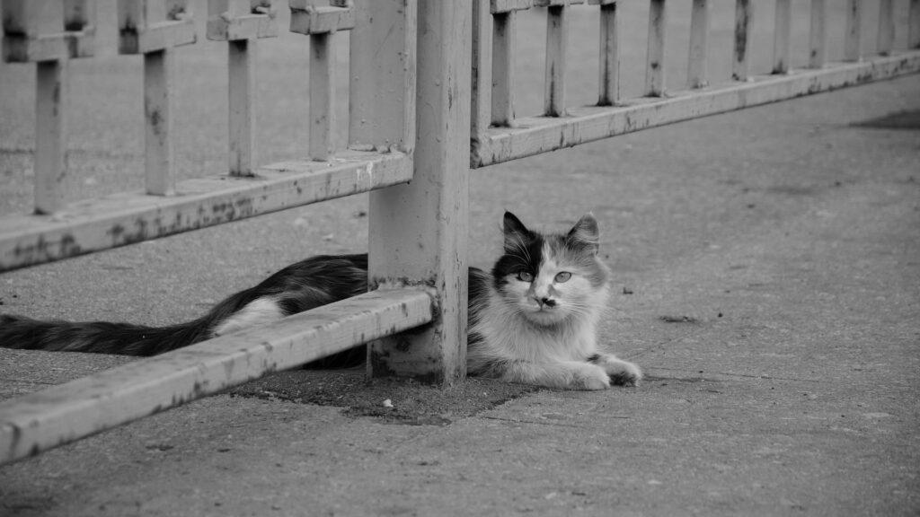 causes de la maladie de Lyme chez le chat