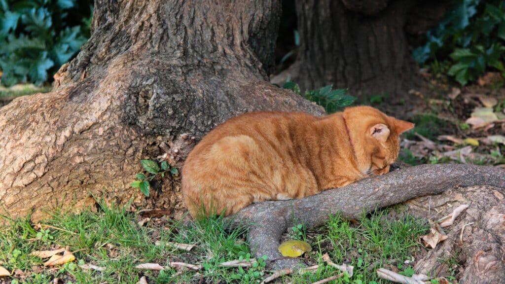 causes pancréatite chat