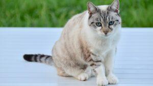 chat constipé