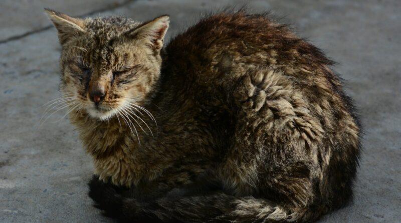 chat empoisonné