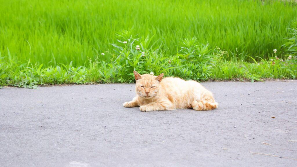 chat empoisonné les causes