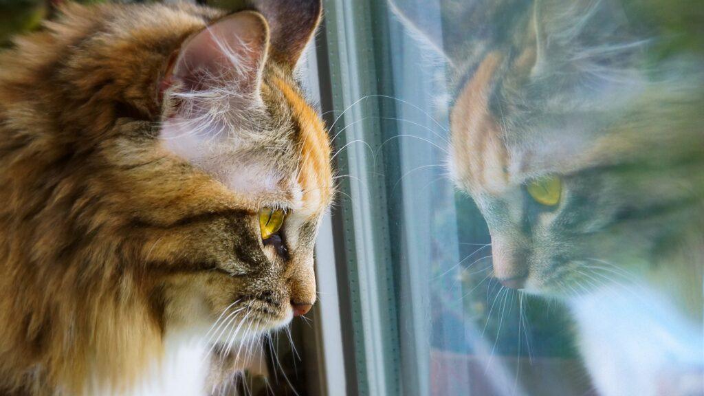 chat triste pourquoi