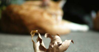 euthanasier un chat