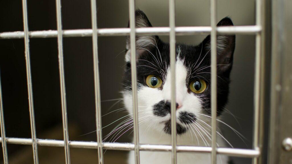 principe pension pour chat