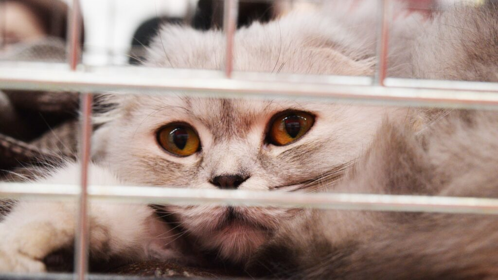 santé et vaccins pour chat
