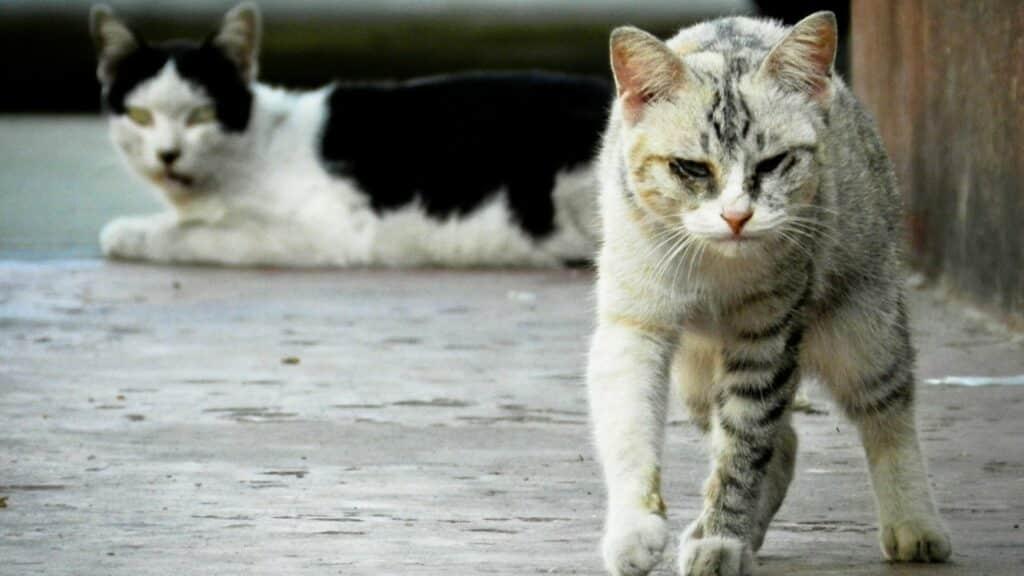 symptômes insuffisance ré,ale du chat