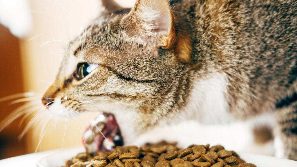 traitement d'un chat qui vomit