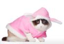 Pourquoi déguiser son chat ?