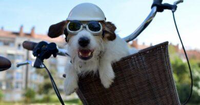 Vélo : 4 solutions pour transporter petits et grands chiens